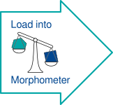 Load into Morphometer